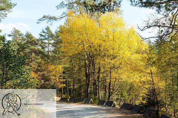 Svinesund og Børtevann, høsten 2017