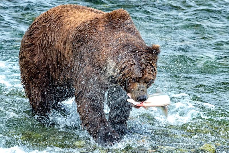 Alaska_2013_FH0T7715.jpg