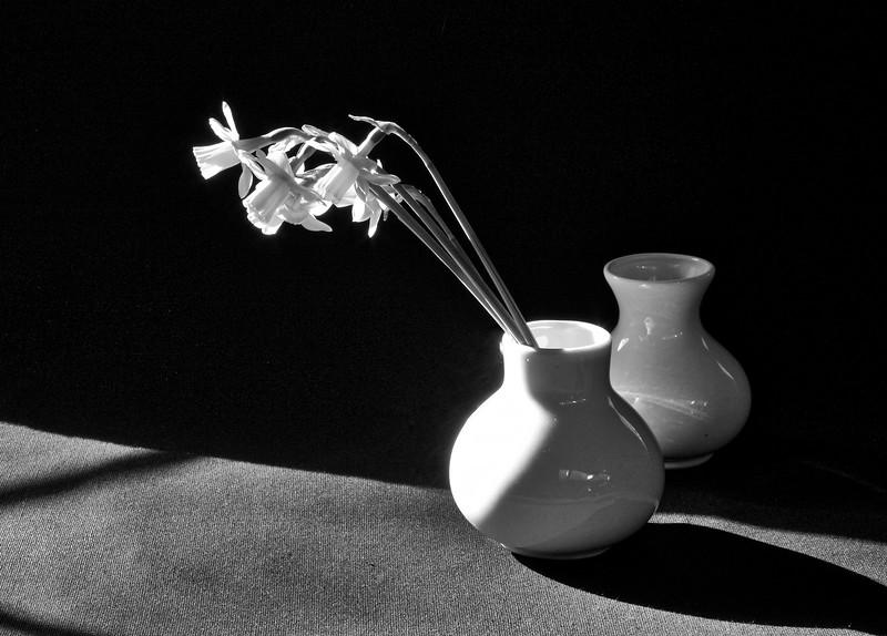 Daffodill 4152 B&W 3.jpg