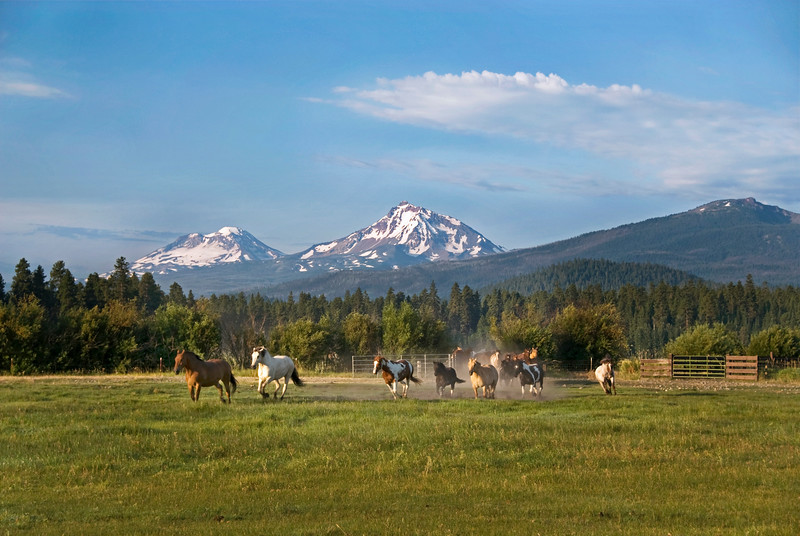 Horses running in the meadow at Black Butte Ranch.  North and South Sisters and Black Crater in the background.
