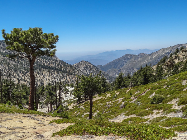 The Three T's-Cucamonga Wilderness above Pomona - Timber Mtn, Telegraph Pk and Thunder Mtn via Icehouse Canyon, July 10,2016