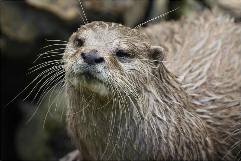 Otter, Planckendaal