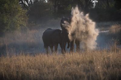 Smoking elephant, Hunda Island, 06 2015