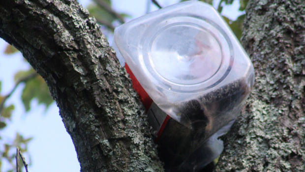 """. 20. (tie) COOKIE JARS <p>Sometimes, just not quite big enough for our snout.   <p><b><a href=\'http://www.northjersey.com/community-news/bear-cub-rescued-after-his-head-gets-stuck-in-cookie-jar-1.1043863\' target=\""""_blank\""""> LINK </a></b> <p>   (New Jersey Department of Environmental Protection)"""