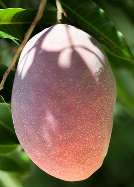 edward mango.jpg