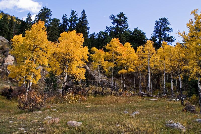 Aspen Grove 1.jpg