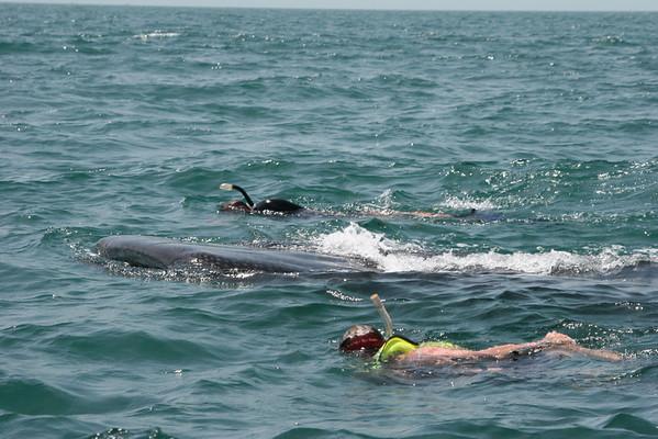 Holbox Island Mexico - Whale Sharks - July 2008