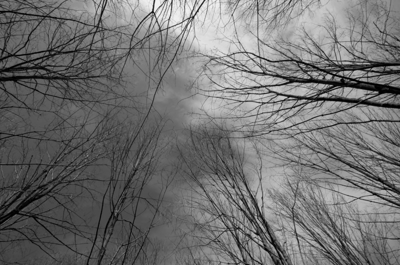 Erie view looking up in middle of a grove of trees in the Rockwood Conservation Area