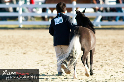 The Last Horse Show of the Year