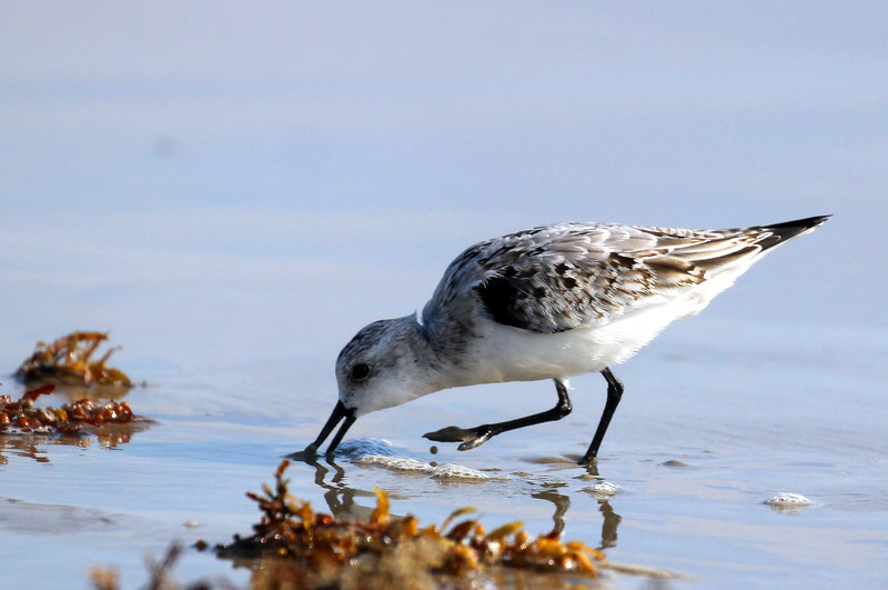 Bird 10-17-15 Port A 047.jpg