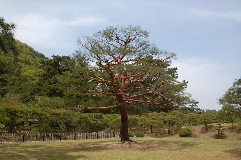 14-Japan2011_0428.JPG