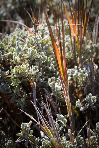 Backlit Frosted Plants