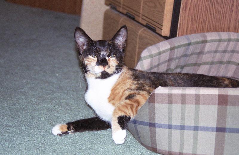 2003 12 - Cats 10.jpg