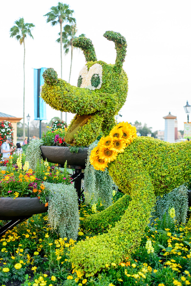 Pluto with Sunflowers Topiary - Epcot Flower & Garden Festival 2016