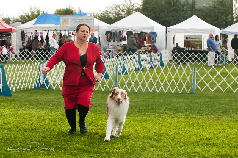 20170114_Kachina Kennel Club_Aussies-47.jpg