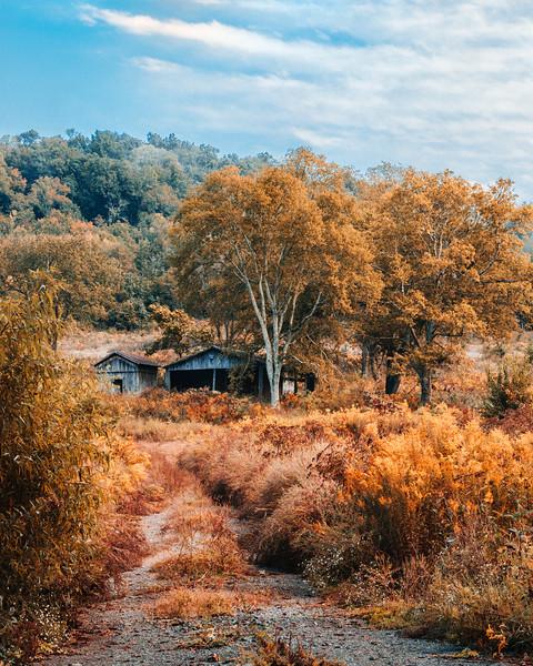 Barn in Fall Field 2.jpg