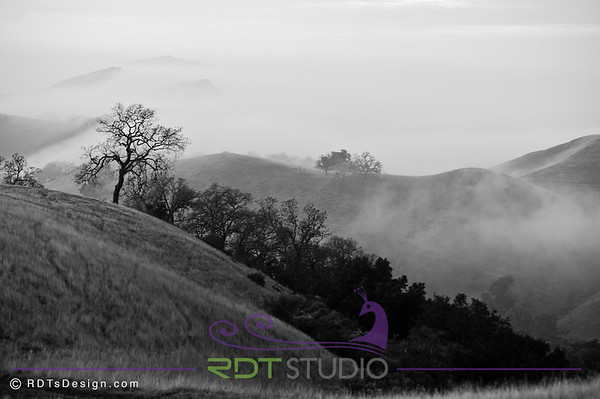 Sunol Valley Regional Park, California