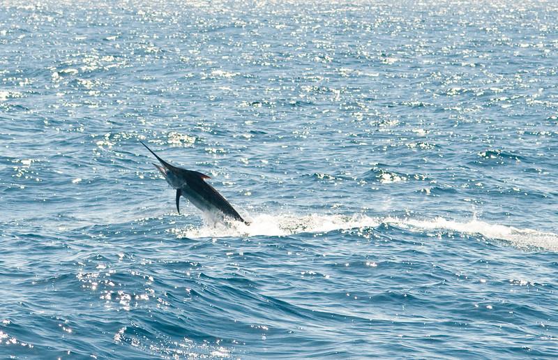 2010 • Los Sueños Marlin Invitational