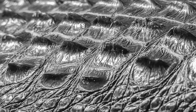 Alligator armor