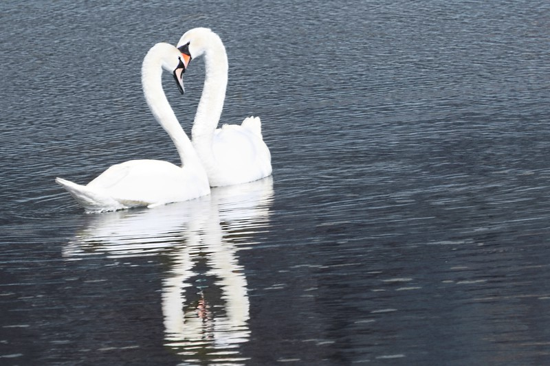 """""""In spring [not only] a young man's fancy lightly turns to love"""" 2013-03-21  Welcome to spring!  Seen yesterday along one of the arms of the Danube, in the national park."""