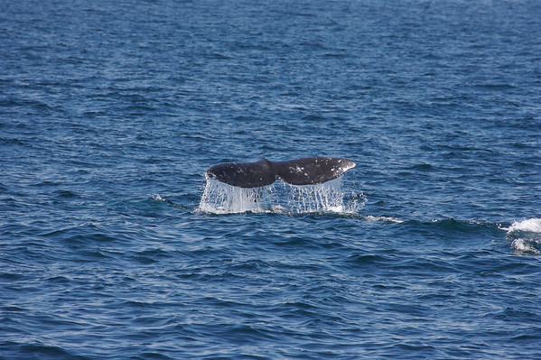 2007 03 Whale Watching