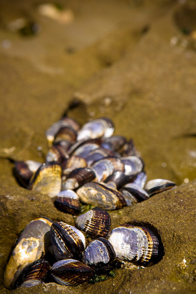 I loved these shells! So cool!