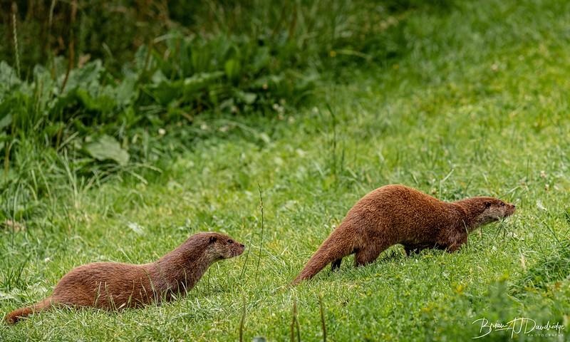 British Wildlife Centre_D850-0083.jpg