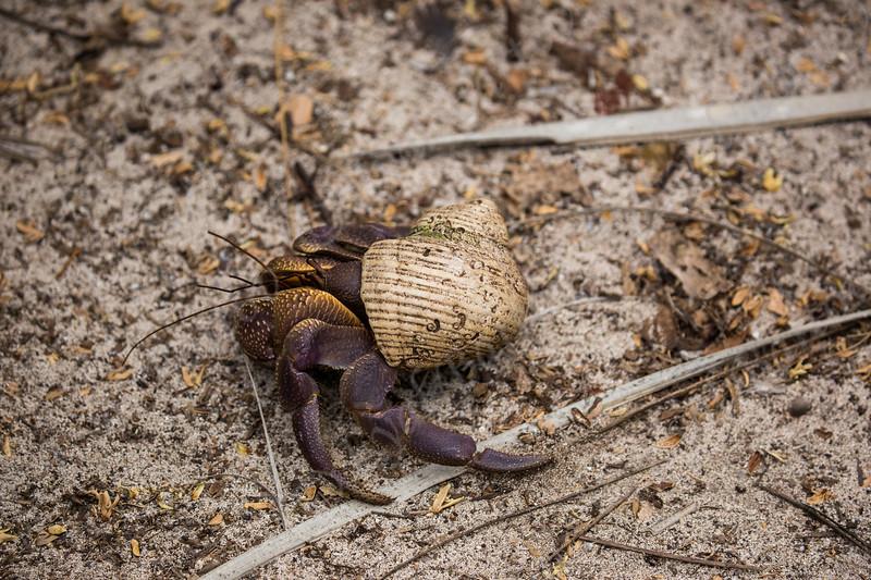 A hermit crab IA8A6407.jpg