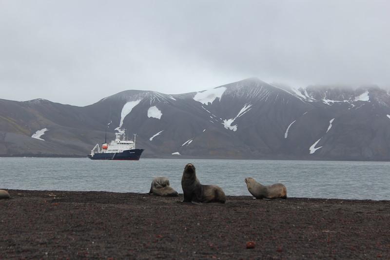 Antarctica 084.JPG