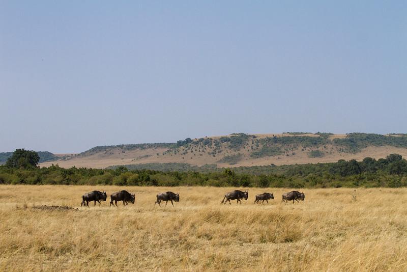 2013-Kenya2013-0722-0240.jpg