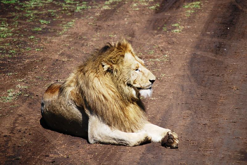 Ngorongoro (116).JPG