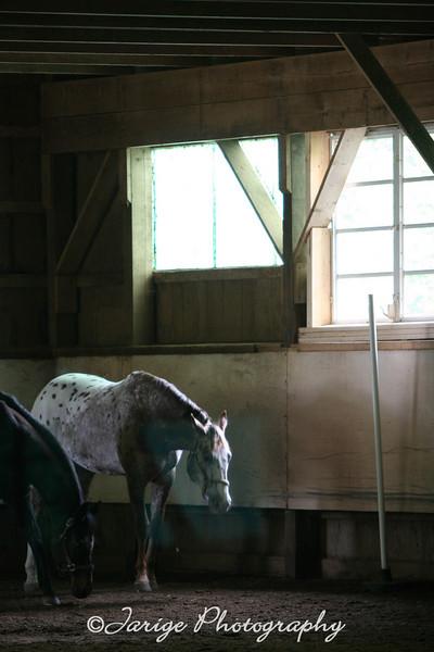 HorseSense Originals