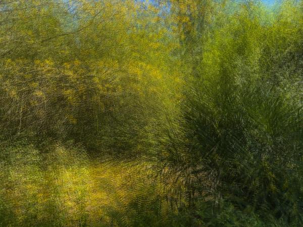 Bok Tower Gardens - Lake Wales, FL - 2021