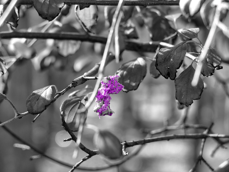 P1080832_purple flower.jpg
