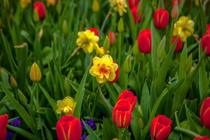 2014_03_22_Arboretum_family-28.jpg