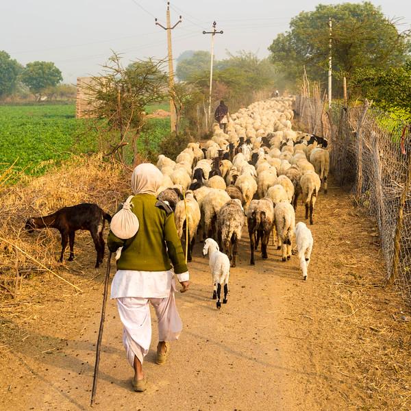 India-71.jpg