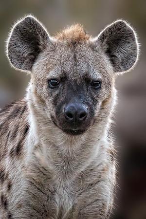 Castleton Singita Reserve S Africa  June 2012