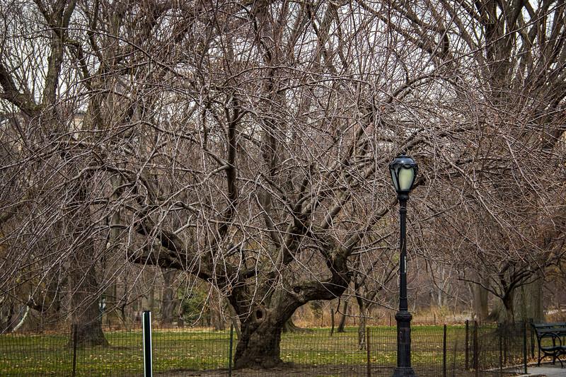 central park tree-2903.jpg