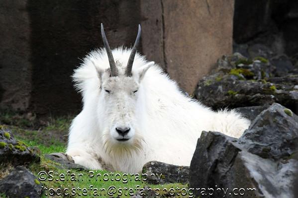 04-06-2014 Oregon Zoo