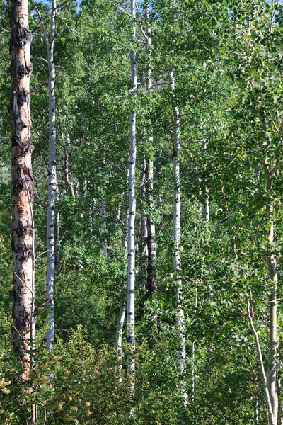 2011_07_08 Wyoming 140.jpg