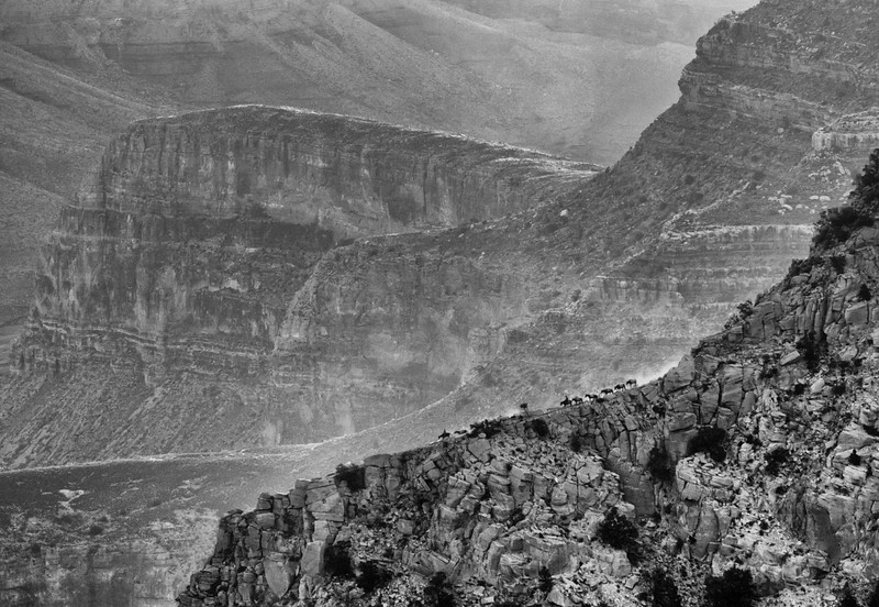 Horse Packers on North Kaibab Trail