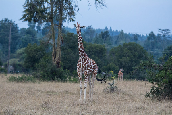 Kenya Trip -2013