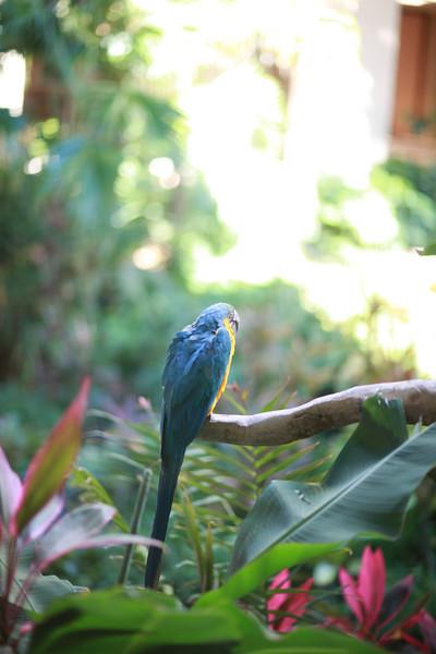 Kauai_D5_AM 242.jpg