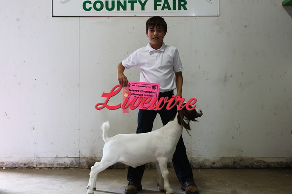 4H Goat Show 2015