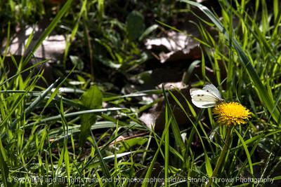 butterfly-wdsm-25sep15-18x12-003-5277