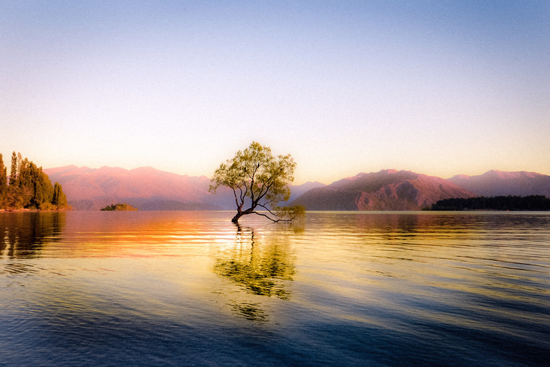 Wanaka-Tree-HR.jpg