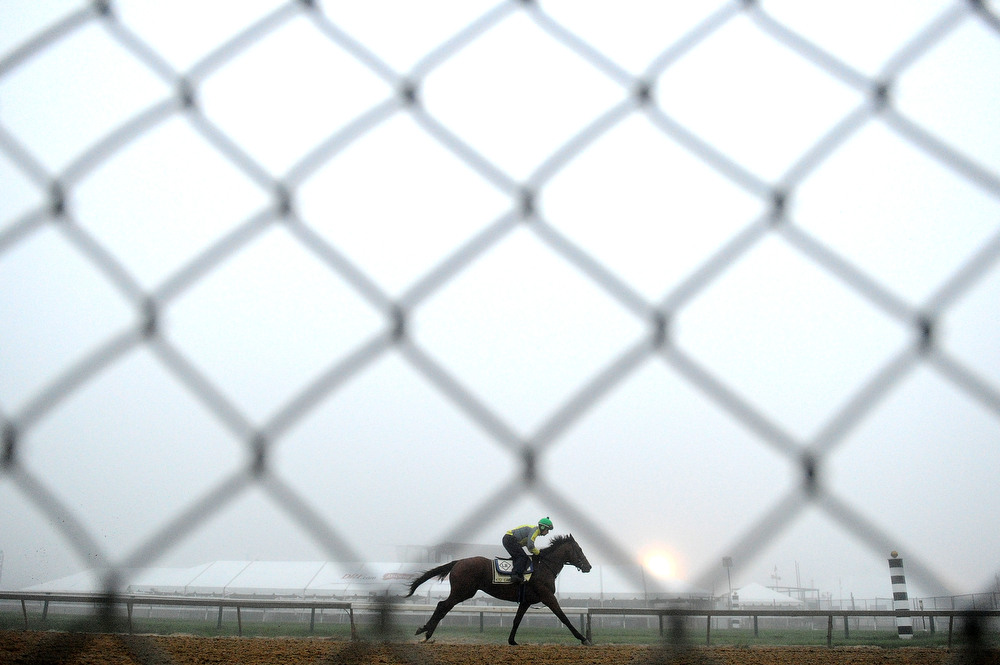 . Kid Cruz works the track in preparation for the 139th Preakness Stakes at Pimlico Race Course on May 15, 2014 in Baltimore, Maryland. (Photo by Patrick Smith/Getty Images)