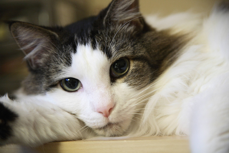 Photo taken November 29, 2006.  K-Cat portrait.
