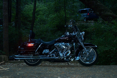 Redwoods - Harley 2002