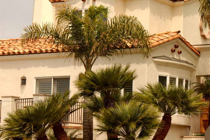 Palms at a home in La Jolla, CA
